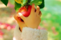 Adopt an apple tree